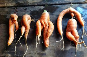 Wonky carrots are akin to bad content formatting