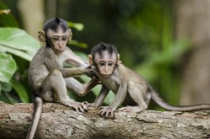 Two baby monkeys with long tails - Our guide to long-tail keywords